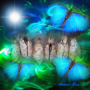 starseed chrysalis