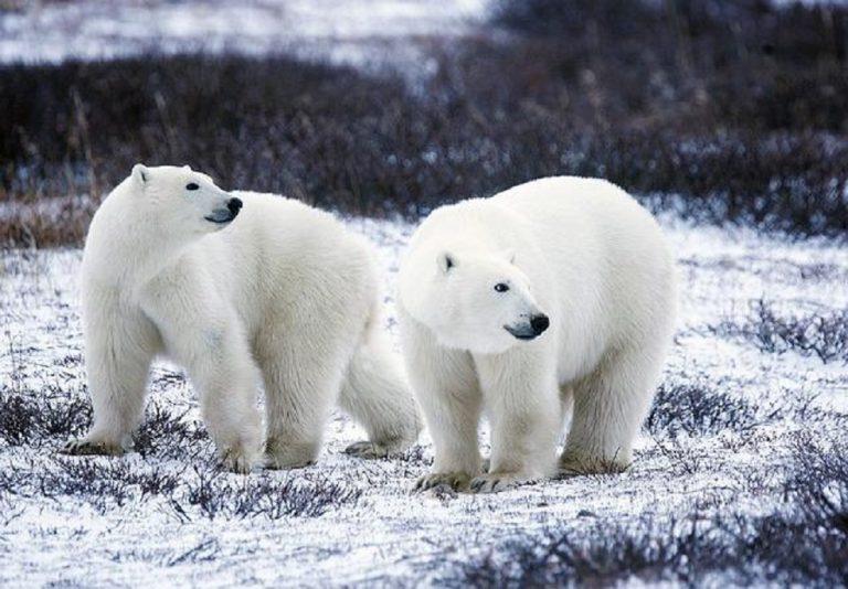 A Polar Ice Story -Meditation