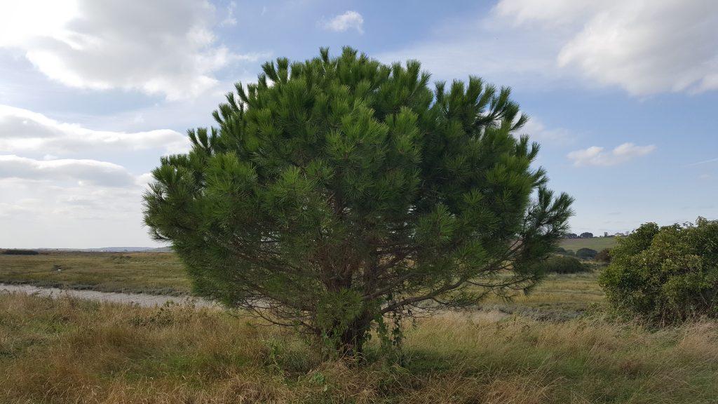 singing vortex tree