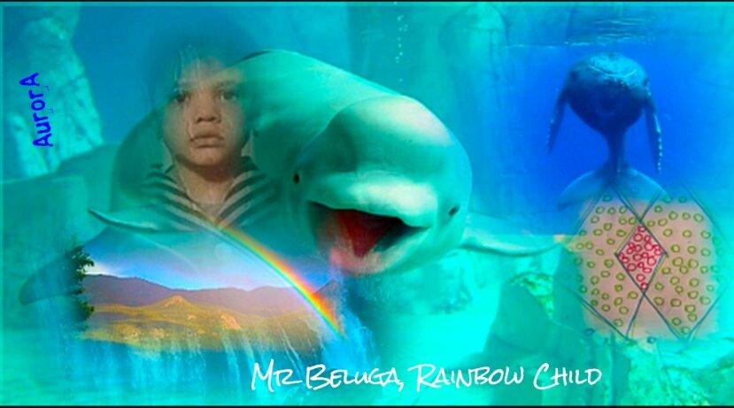 mr Beluga